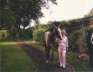 Indian Skimmer (horse)