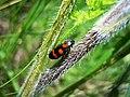 Insekti, Spomen park Bubanj (5).jpg