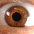 Iris of the Human Eye.jpg