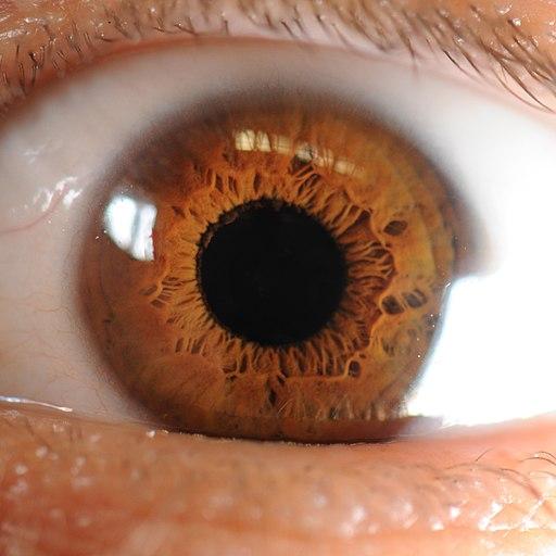 Iris des menschlichen Auges