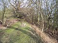 Iron Age Defences on Hollybush Hill - geograph.org.uk - 110258.jpg