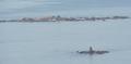 Islas Lobeiras.png