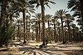 Israel (4767352507).jpg