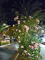 Itálie Alba Adriatica 2.jpg
