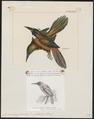 Jacamerops grandis - 1700-1880 - Print - Iconographia Zoologica - Special Collections University of Amsterdam - UBA01 IZ16800391.tif