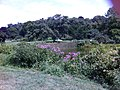 Jamaica Hills - Pond, Boston, MA, USA - panoramio (42).jpg