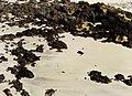 January Teguise Beach - Master Lanzarote Photography 1992 - panoramio.jpg