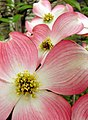 Japan Blossoms 01.jpg