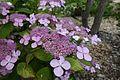 Japanese garden @ Fort d'Issy-les-Moulineaux (34984175371).jpg