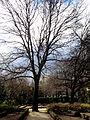 Jardín Botánico de Madrid en febrero (16468977828).jpg