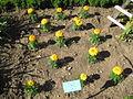 Jardin botanique Dijon 024.jpg