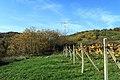 Jeseň vo vinohradoch - panoramio (6).jpg