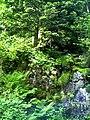 June Grüne Hölle Bergwälder Glottertal - Mythos Black Forest Photography 2013 green mountain forest - panoramio (5).jpg