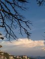 Juxtaposed-Clouds and Trees.jpg