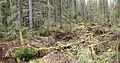 Jyväskylä - fallen trees.jpg