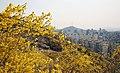 KOCIS Korea Seoul Spring Flowers 15 (8662709682).jpg