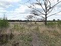 Kalmhoutse Heide 2015 2.jpg