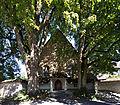 Kapuzinerkloster Solothurn - Lindenbäume - 01.jpg