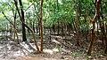 Kava - Anakkal Road in Forest, Palakkad - panoramio (8).jpg