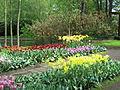 Keukenhof Garden (9).JPG