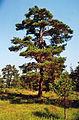 Kiefer-Ardre-Gotland-2010 01.jpg