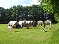 Krigshistorisk Festival - Legio VI Victrix Cohors II Cimbria 01.jpg