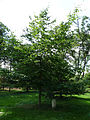 Kroměříž, Podzámecká zahrada (45a).jpg