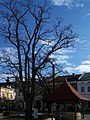 Krosno, Old Town Market Square - panoramio.jpg