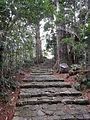 Kumano Kodo pilgrimage route Daimon-zaka World heritage 熊野古道 大門坂53.JPG