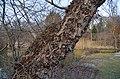 Kurpark Oberlaa 32 - tree trunk.jpg