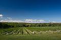 L'Acadie Vineyards Nova Scotia.jpg