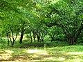 Lagodekhi Green (Photo by Peretz Partensky, 2009) (4).jpg