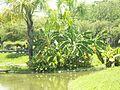 Lagos Parque del Este 005.JPG