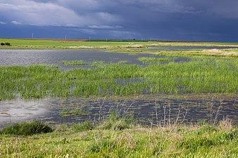 Laguna de San Pedro Villarrín de Campos.jpg