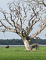 Lahugala Sri lanka.jpg