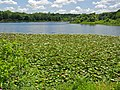 Lake Artemesia (7391806844).jpg