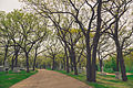 Lakewood Cemetery, Minneapolis (17380132016).jpg