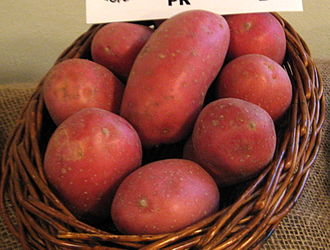 Laura potato - Image: Laura (odrůda brambor)