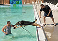 Law enforcement conducts K-9 water training 120918-F-TS228-178.jpg