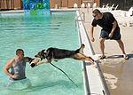 Law enforcement conducts K-9 water training 120918-F-TS228-178.jpg