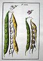 LeBerryais Haricots planche 30.jpg