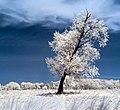 Leaning Tree (15882296689).jpg