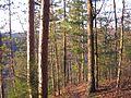 Leonard Harrison State Park Trees.jpg