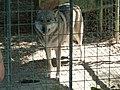 Libearty Bear Sanctuary 1230788.jpg