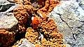 Lichens Burns - panoramio.jpg