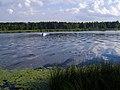 Lielupe - panoramio (27).jpg