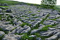 Limestone pavement above Malham Cove (5834).jpg