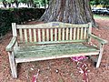 Long shot of the bench (OpenBenches 2838-1).jpg