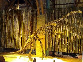 Massopoda - Mounted skeleton of Lufengosaurus