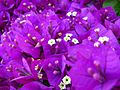 Macro-Purple-Flowers-2 ForestWander.jpg